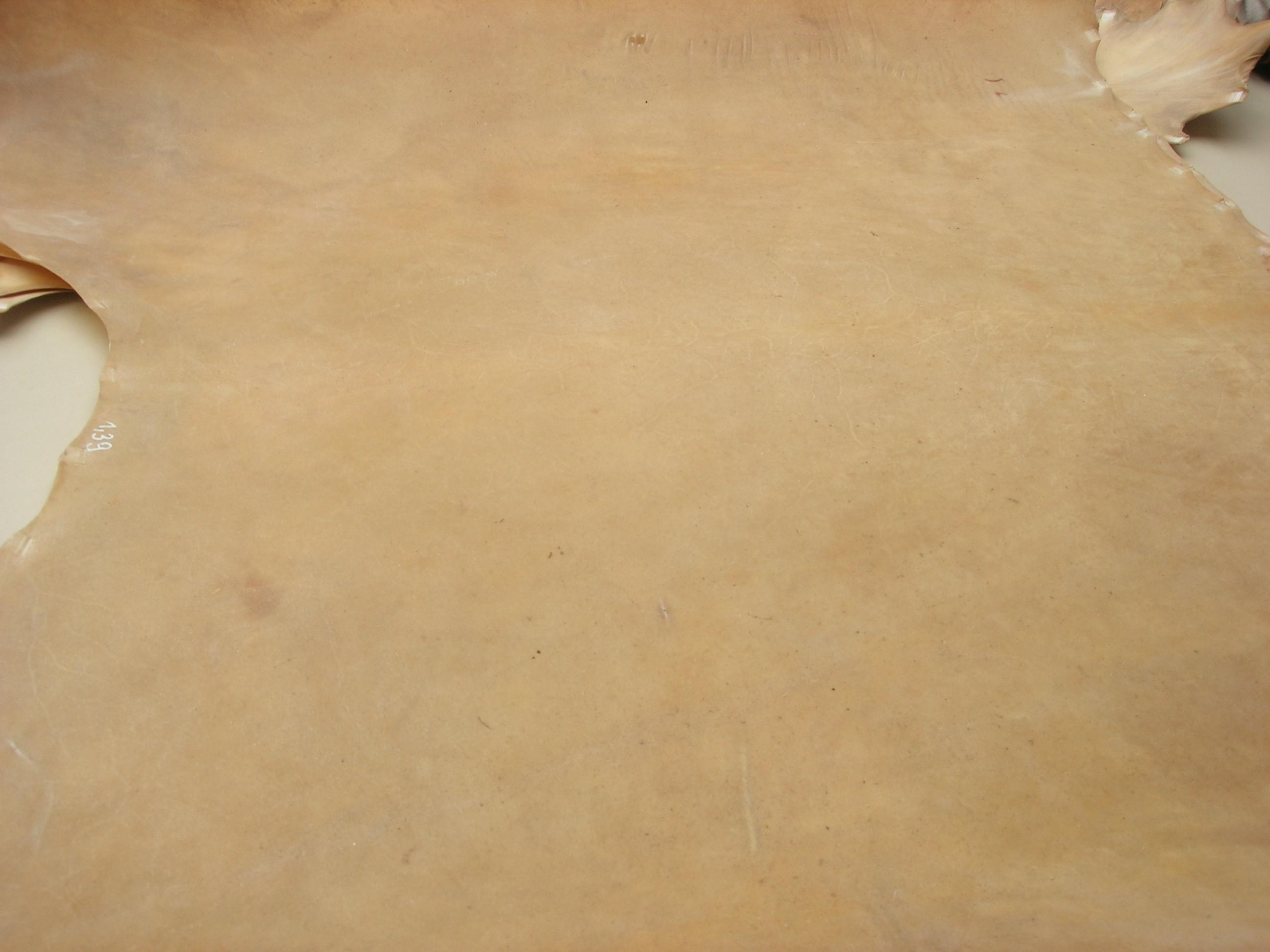 Pergament Rind Rohhaut Croupon (RPU1921)